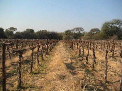 Namibia Winery - Kristall Kellerei Vineyard