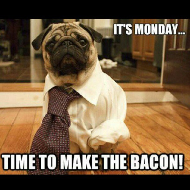 Back to reality #work #Monday #makemoney #bacon #gaybacon #instadog #memes #LOL #jokes #motivation #igdaily #doubletap #hustle  (Taken with Instagram)