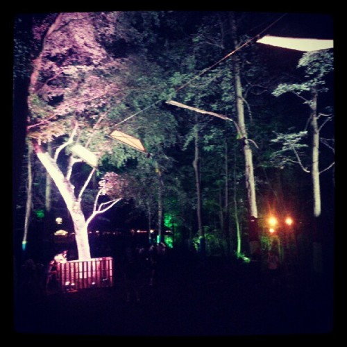 The enchanted forest (Taken with Instagram)