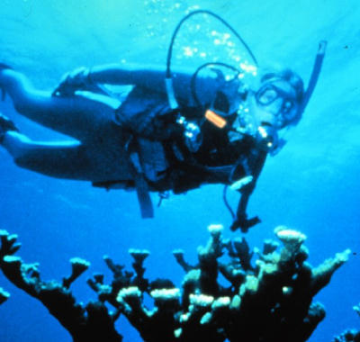 How Scuba Works: In 1943, the famed oceanographer Jacques Cousteau, along with Emile Gagnan, invented the aqualung, more commonly referred to as scuba (self-contained underwater breathing apparatus). Scuba made divers more mobile and revolutionized exploration of the oceans. Since then, many advances in scuba technology have made the equipment easier to use, safer and more affordable, allowing many people to enjoy this fascinating adventure. The Professional Association of Diving Instructors (PADI) says that each year, almost 1-million people get certified for recreational scuba diving. You can undertake weekend outings to explore offshore shipwrecks and coral reefs or go on longer dive vacations to exotic locations, perhaps meeting such creatures as sharks, dolphins and whales.  The underwater environment is hostile to humans and offers unique challenges to the scuba diver with respect to breathing, temperature control, visibility and buoyancy. The basic equipment that you need for scuba diving allows you to cope with the underwater environment. In total, you carry 60 to 75 pounds (27 to 34 kg) of equipment with you into and out of the water. In this article, we will look at the underwater world, examine the scuba equipment and explore how your body reacts to the underwater environment. You'll also find out what you need to do to take part in this sport. Continue…