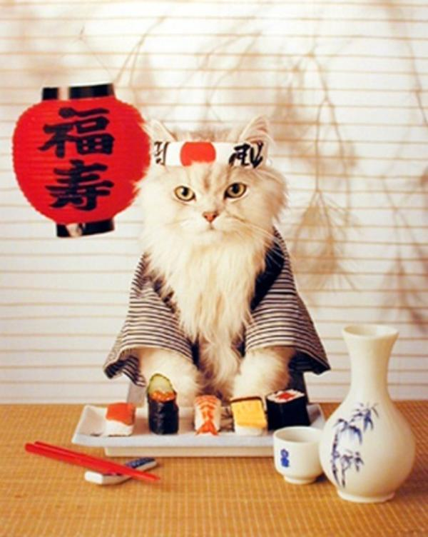Sushi Cat (via: Yo Sushi)