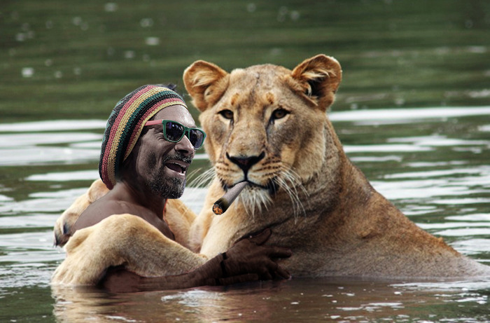 Snoop. Lion. In. The. Water.