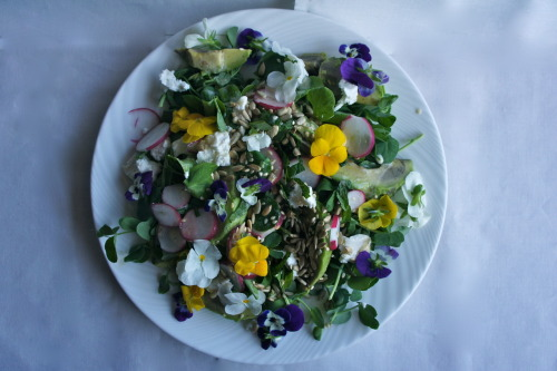 Edible flower salad with goat's cheese and tahini sauce. Place a handful of pea shoots on a plate. Layer with a few slices of avocado. Sprinkle with some toasted seeds (sunflower, sesame, pumpkin). Scatter pieces of goat's cheese curd and sliced radish over the salad.  Make a dressing by whisking together a spoonful of tahini, the juice of 1/2 lime and a glugg of olive oil. Season with sea salt and pepper and drizzle over the salad. Garnish with edible flowers (violets or nasturtiums). Serves 1.