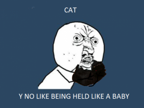 Cat Ragehttp://ragecomics4you.tumblr.com