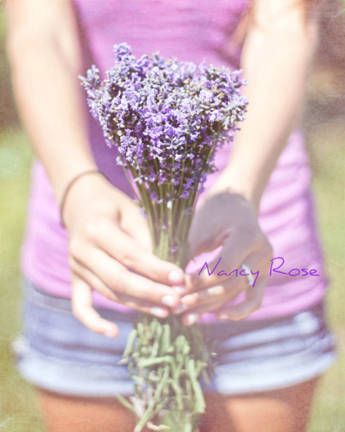 Lovely lavender for you! (by Nancy Rose)