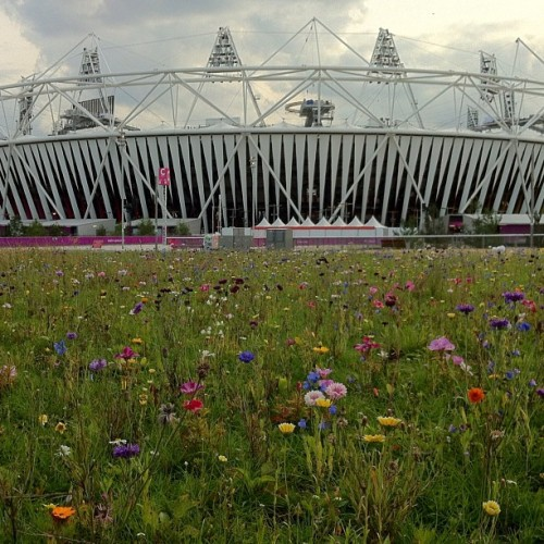 Wildflowers grow outside Olympic Stadium shortly before the games begin.
