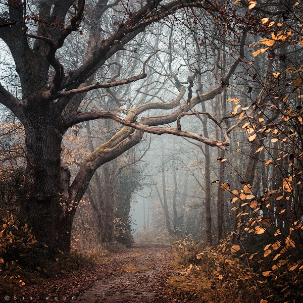 secretforest:  Autumn Mantra by Oer-Wout on Flickr.