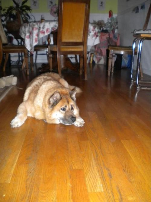 Goodbye, Sandy. You were the best dog.
