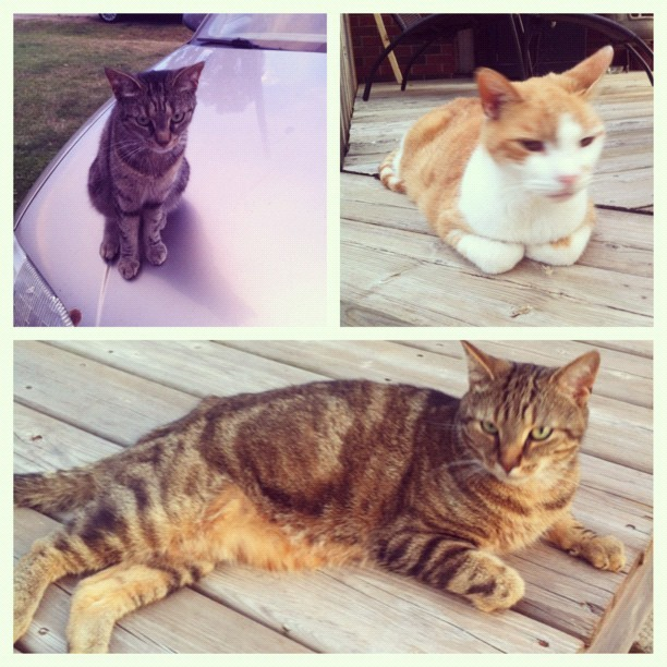 The three martin cats (Taken with Instagram)