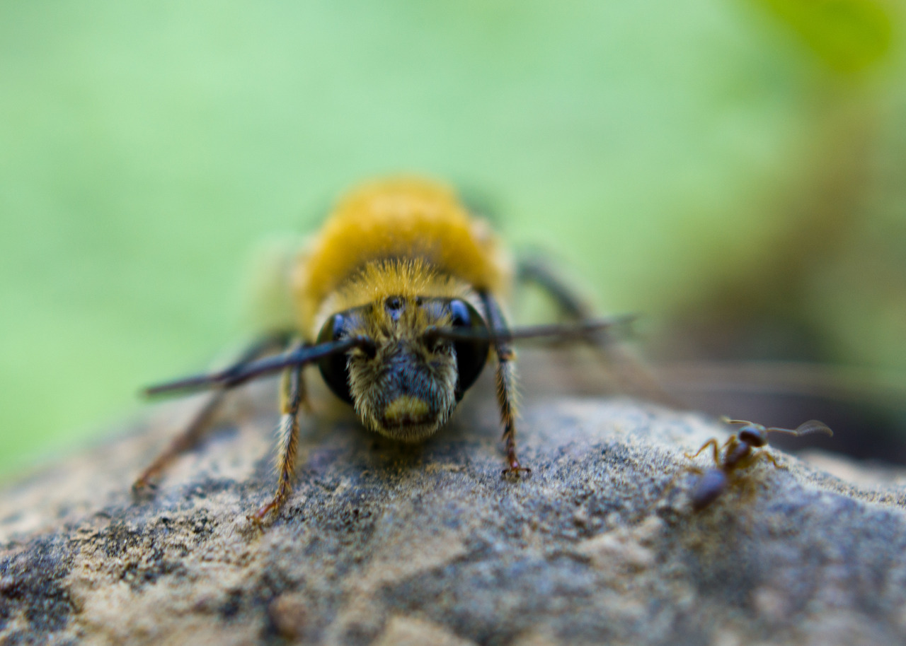 The Bee and the Ant By Michael Vermouth The only reason for making a buzzing-noise that I know of is because you're a bee…The only reason for being a bee that I know of is making honey….and the only reason for making honey is so I can eat it. ~ Winnie the Pooh in A.A. Milne's 'The House at Pooh Corner'