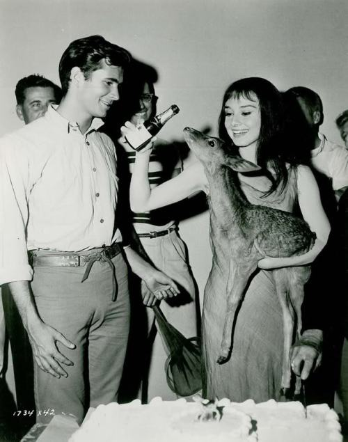 Anthony Perkins and Audrey Hepburn (holding her pet fawn Ip) on the set of Green Mansions (1959)