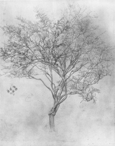 suicideblonde:  Study of a Lemon Tree (1859) by Lord Frederick Leighton