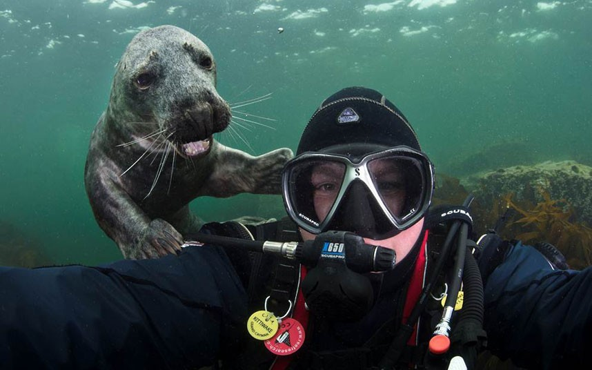 allcreatures:  A seal pup grins over the shoulder of photographer Alex Mustard as he takes a self-portrait off the Northumberland coast Picture: Alexander Mustard / Barcroft Media (via Pictures of the day: 23 July 2012 - Telegraph)