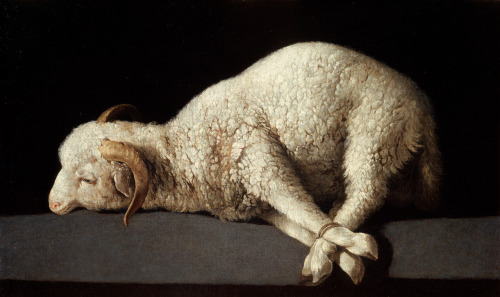 "cavetocanvas:  Francisco de Zurbarán, The Lamb of God, c. 1635-40 From the Museo del Prado:  This votive image was wide-spread in seventeenth-century Spain. It represents an Agnus Dei or ""Lamb of God,"" in allusion to Christ's sacrificial death to save humanity. The straightforward composition consists exclusively of an image of the young animal with its legs bound, lying on a windowsill and brightly light by a single light source."