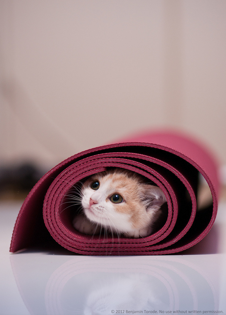 magicalnaturetour:  I'm in your yoga mat, strengthening my core (by torode) :)