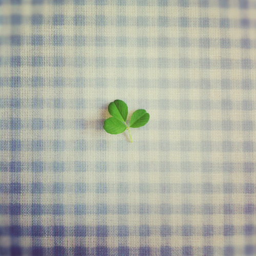 ~ Shamrock ~ by * Ailbhe O'Donnell * on Flickr. [for more-BadranAlshaikh]