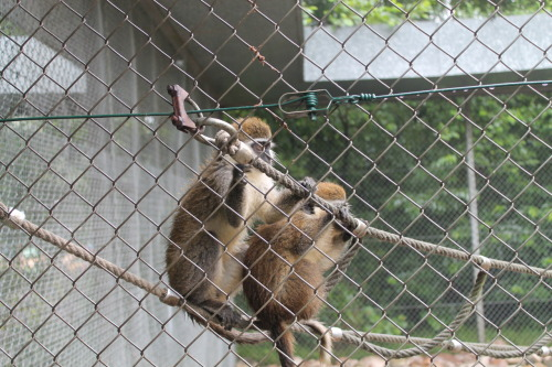 my photography - monkeys