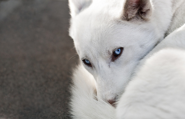 Ice blue eyes by Amaliebratland on Flickr.