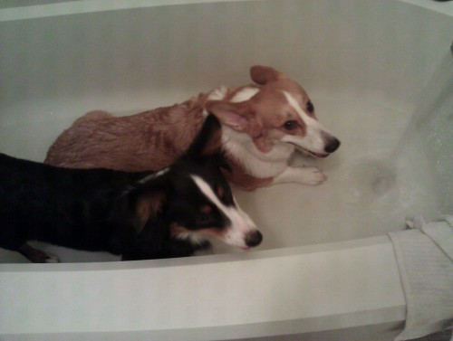 Nice cool roll in the bath after a fun romp in the dog park! :D