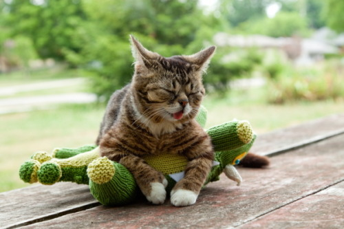 BUB shows dominance over BFF. There is only one BUB!