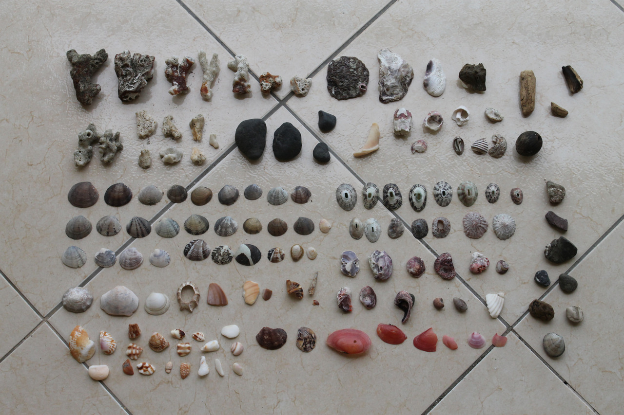 SUBMISSION: things i found on the beach. costa rica.