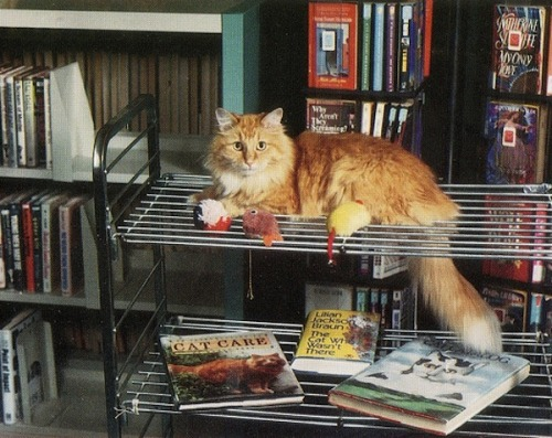 nypl:  Library cats! This is Dewey from Iowa's Spencer Public Library. Click through to see a slideshow of feline mascots from libraries around the country. And happy Caturday!