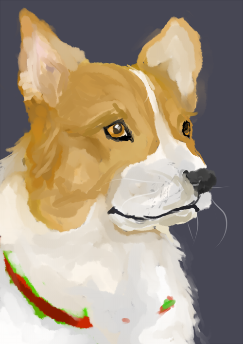 corgi for AMY complete!!!!