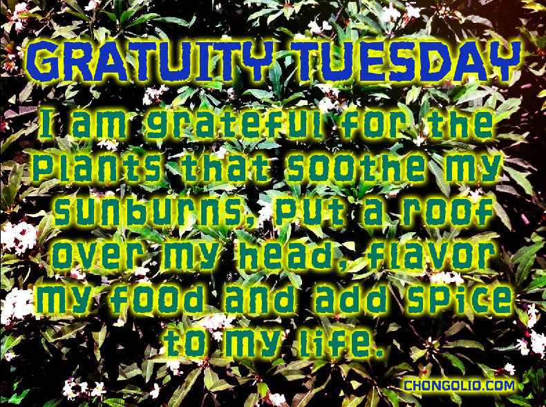 #gratuitytuesday I am grateful for the plants that soothe my sunburns, put a roof over my head, flavor my food and add spice to my life. What you got today? Take the time to give it some thought and appreciation. Go on it will make you feel good!