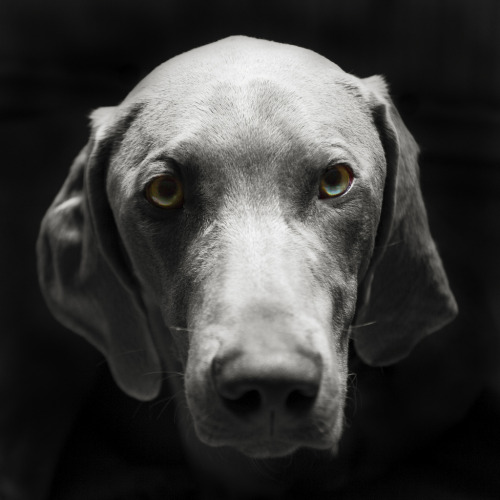 PHOTO OP: Portrait of a Dog Via spodzone.
