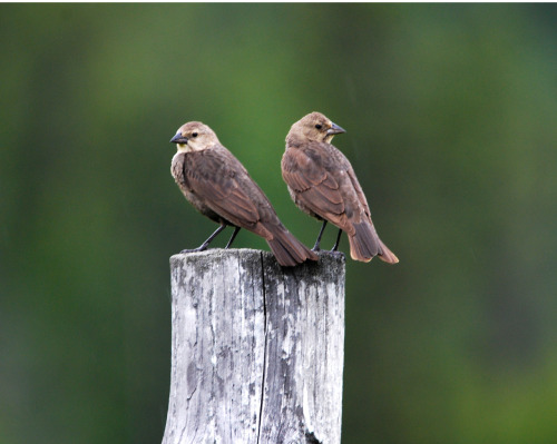 Just two birds perched on a post