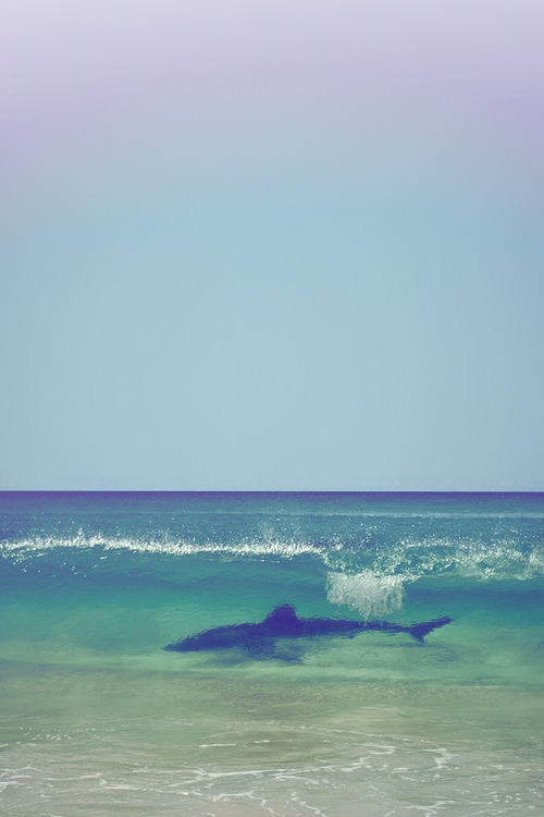 endless-void:  This would probably freak me out if I saw it.  I want to swim with it!
