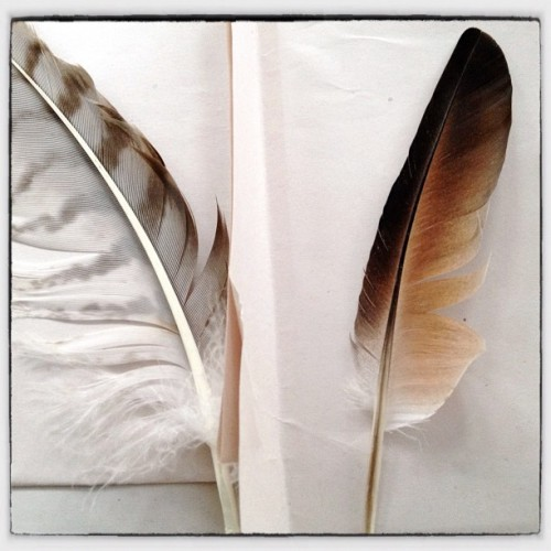 Two feathers. #feathers #paper #stilllife  (Taken with Instagram)