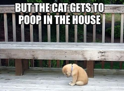 awe poor puppy