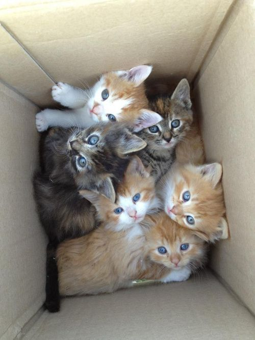 view-from-up-here:  AWW a box of kittens though