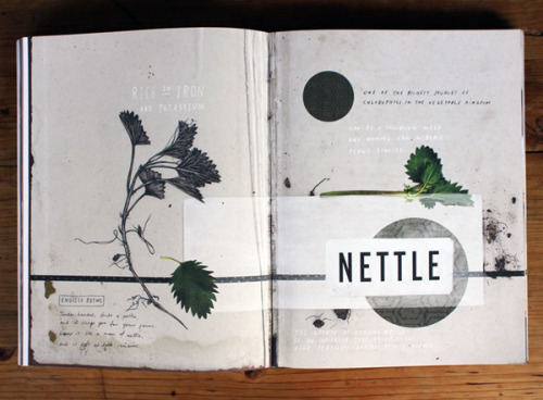 Nettle: http://anthologymag.com/blog3/2012/07/24/mr-wilkinsons-favourite-vegetables/
