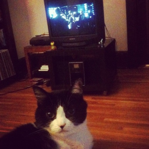 """He likes to make intense eye contact when you're watching a movie."" (Taken with Instagram)"