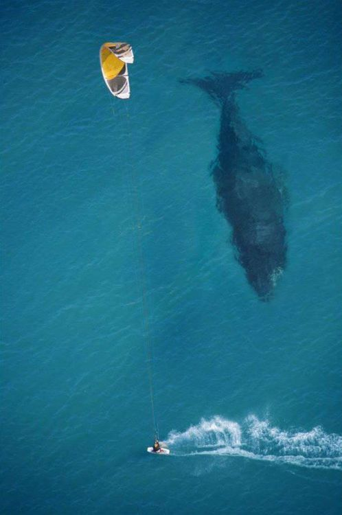Putting the size of a whale into perspective