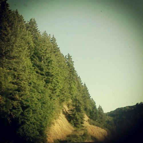 lylaandblu:  To Oregon, the trees, and long stretch of road… (Taken with Instagram)
