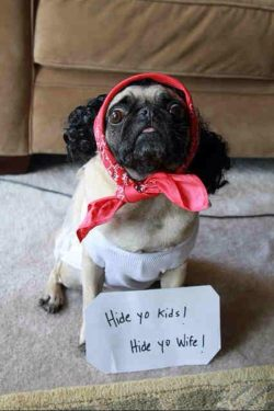puglovinnn:  Follow PugLovinnn Cutest Pugs ever!! You'll love it on your dash!