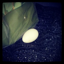 our #polishchicken laid her first #egg!! in the patio room on the couch LOL  (Taken with Instagram)