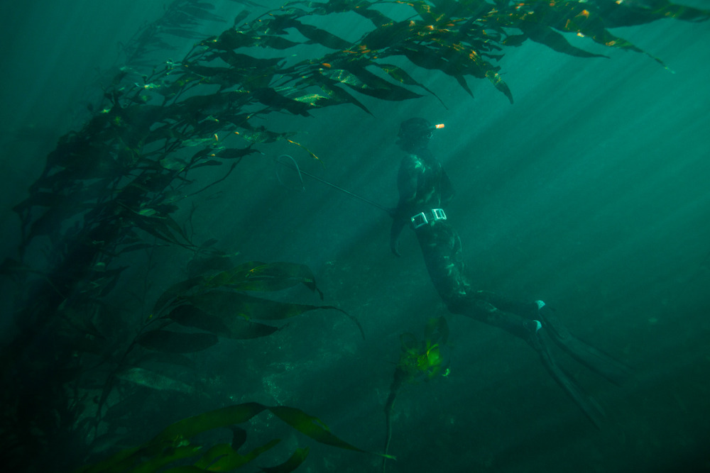patagonia:  Spearfishing in British Columbia.  Photo Jeremy Koreski