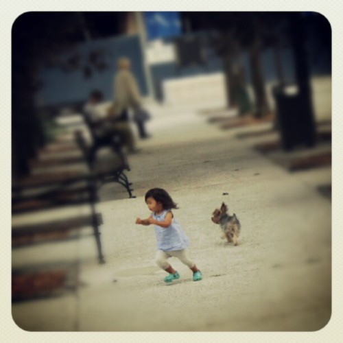 07242012 #LincolnCenter #DamroschPark // Super #Cute :3 They #Scared each other at the same time and both started #RunningAway :P // #NYC #People #Parks #Running #Girl #Dog #Kids #Puppy  (Taken with Instagram at Damrosch Park)