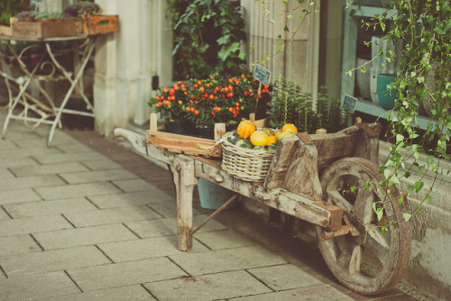 wheelbarrow by Suzi Marshall on Flickr.[for more-BadranAlshaikh]
