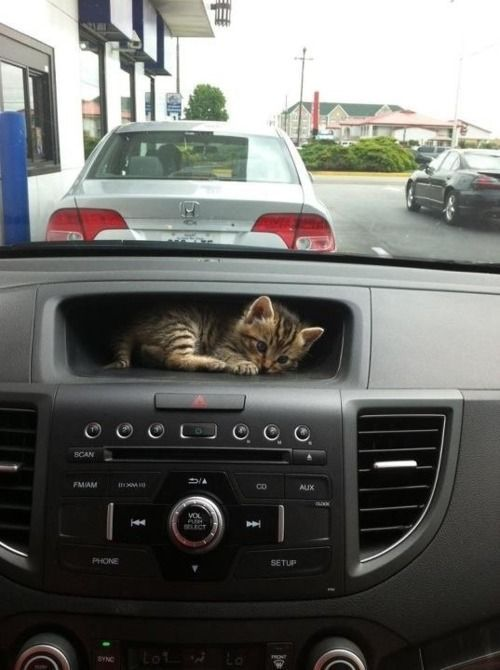 thefrogman:  I couldn't afford a GPS so I got a kitten.