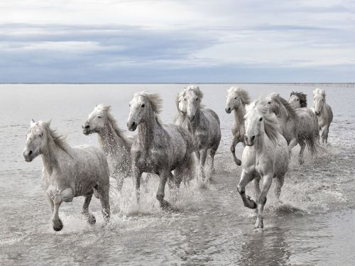 """Wild Horses could not drag me away from you"" — Gino Vanelli song (via National Geographic)"
