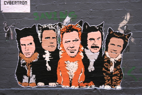 tomhanksy:  Ferrell cats. NYC.  Hanksy makes me laugh so much!