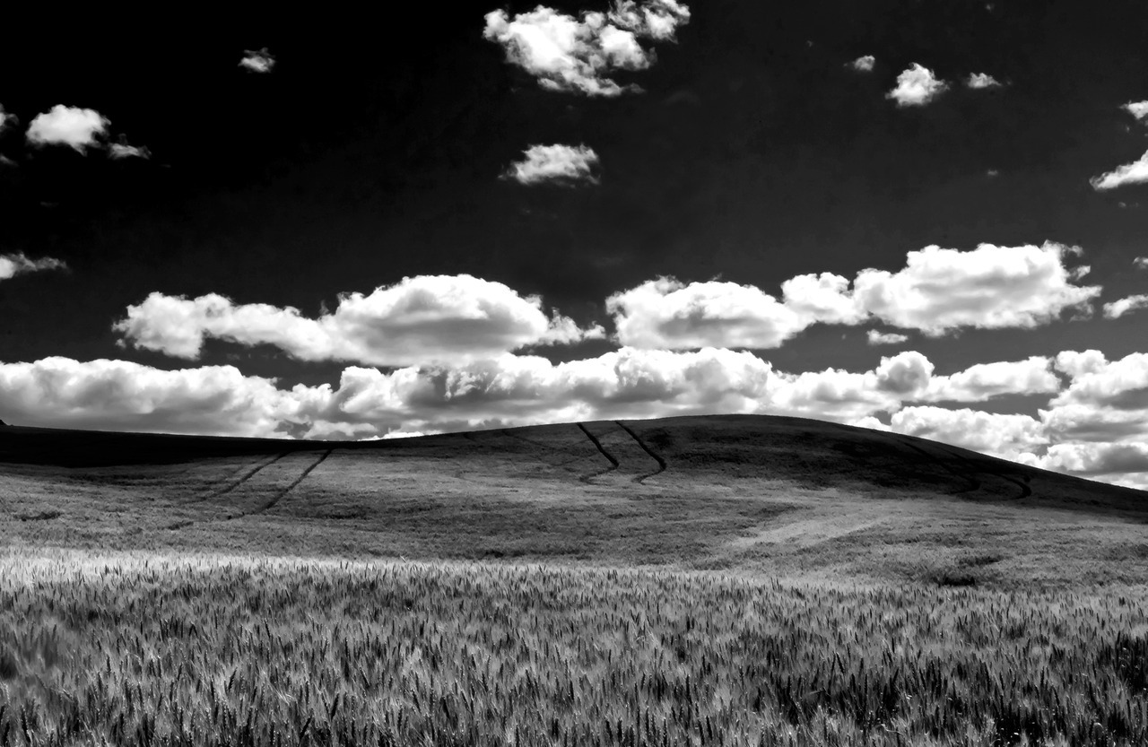 Off Palouse Highway, Black and White  I don't know if I like this or the color version better.