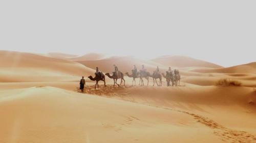 Me on a camel trek in the sahara! (I'm one the first camel)