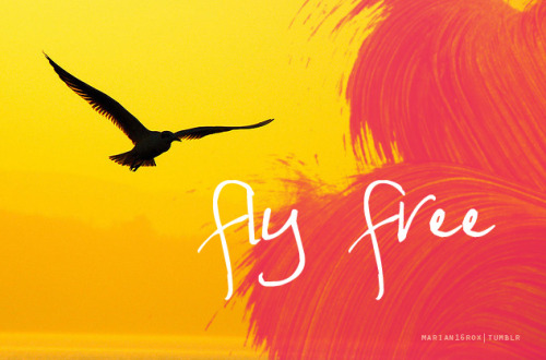 Fly free. Adventure awaits you.