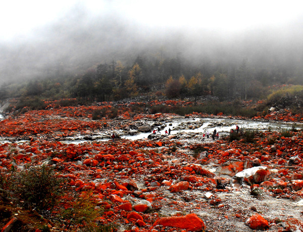 A newly discovered red algae that has taken over exposed rocks along a river on Mount Gongga, China. Debris slides exposed a new habitat, allowing the red species to take over, so colored due to their carotenoid pigments. (↬ Short Sharp Science)